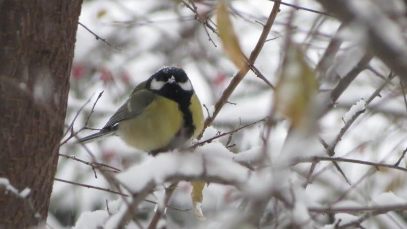 Meteo: Se opresc ninsorile, dar vine gerul. Câte grade vor fi la Botoșani!