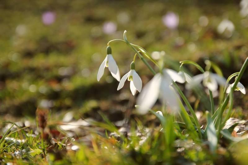 Meteo: Vreme frumoasă în prima zi de primăvară. În weekend se răcește simțitor