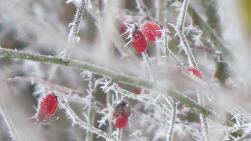 Meteo: Vremea schimbă foaia și revine zăpada