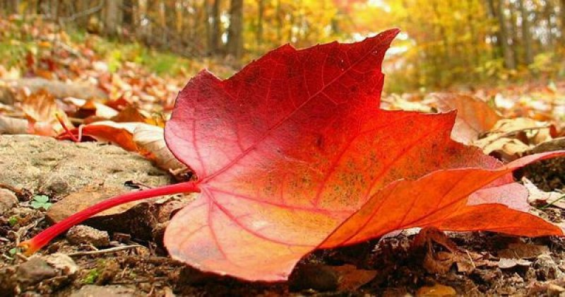 Meteo: Vremea se răcește treptat, cu minime ce coboară până la 2 grade la Botoșani