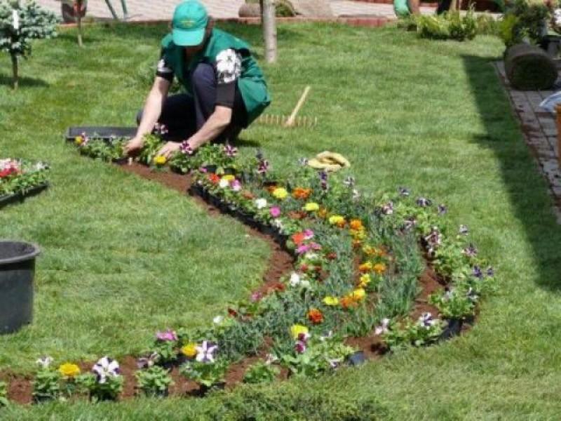 Mii de flori vor înfrumuseța, de săptămâna viitoare, municipiul Botoșani. Cine a câștigat licitația!