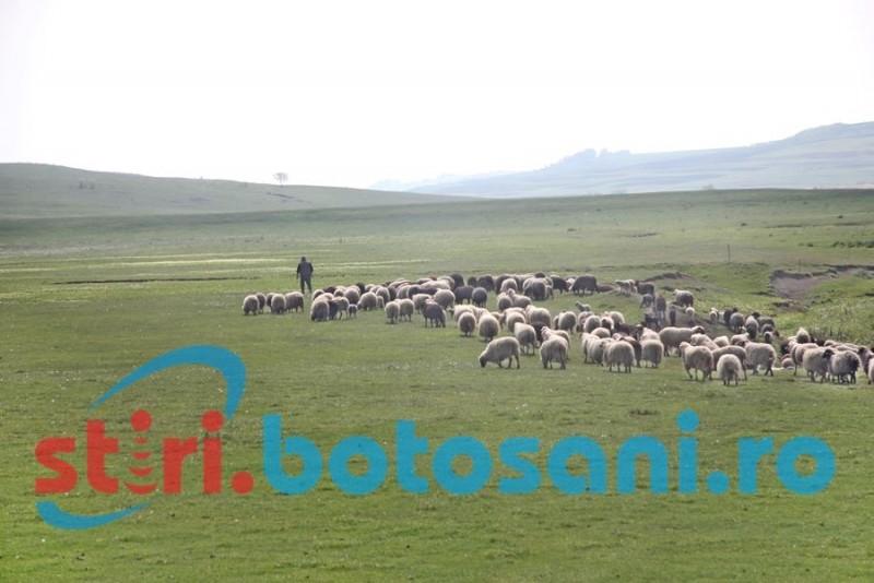 Ministrul Daea, despre numărul câinilor de la stână: Stabilit de fiecare cioban în parte. Nu câinii sunt duşmanii naturii