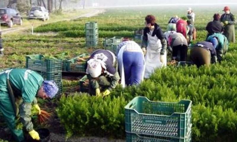 Ministrul Muncii vrea să reducă perioada de așteptare pentru acordarea pensiilor internaționale ale românilor