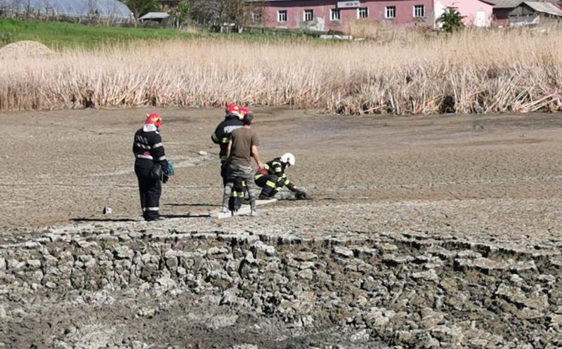 Misiune complicată pentru salvarea unui cățel din mâlul iazului Polonic de la Dorohoi