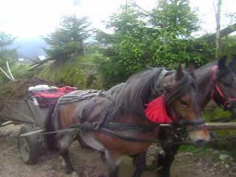 Moarte cruntă: Strivit de căruța cu tot cu cai care a trecut peste el!