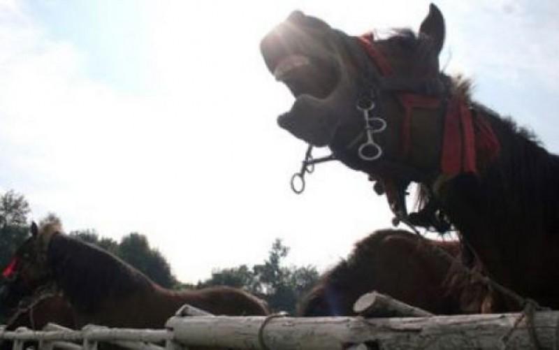 Mutilat de propriul cal, transportat la Iași în stare gravă!