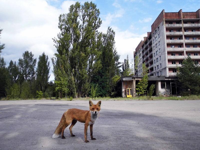 Natura preia puterea la Cernobîl: 50 de imagini din locul pe care oamenii l-au părăsit FOTO