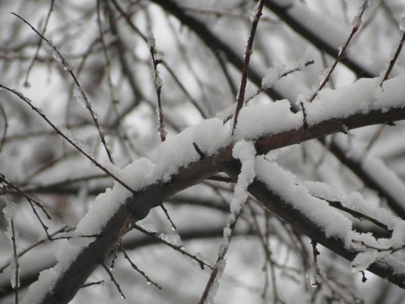 Ploi, ninsori și viscol în toată țara! Câte grade vor fi mâine la Botoșani!