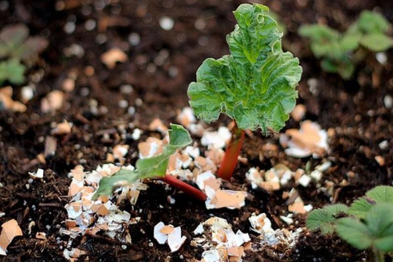 Nu aruncați cojile de ouă! Iată 5 idei pentru a le folosi în grădină și nu numai!