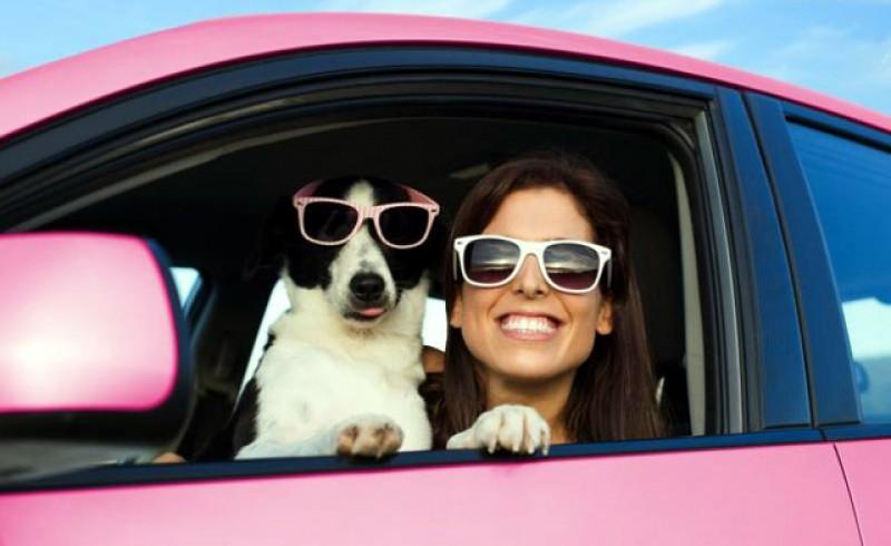 Nu lăsa câinele pe scaunul din față în mașină. Amenda este de aproape 3000 de lei!