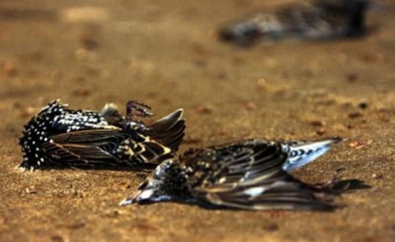 Nu suntem singurii afectați în această perioadă: Aproape un milion de păsări au fost găsite moarte