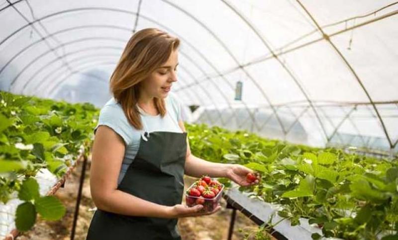 O nouă lege în agricultură: 20.000 de euro subvenție pentru producătorii agricoli care comercializează produse agricole primare