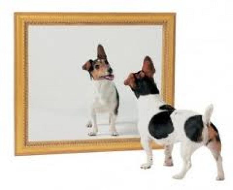 O PILDA: Câinele în oglindă. Tu pe cine vezi în oglinda ta?