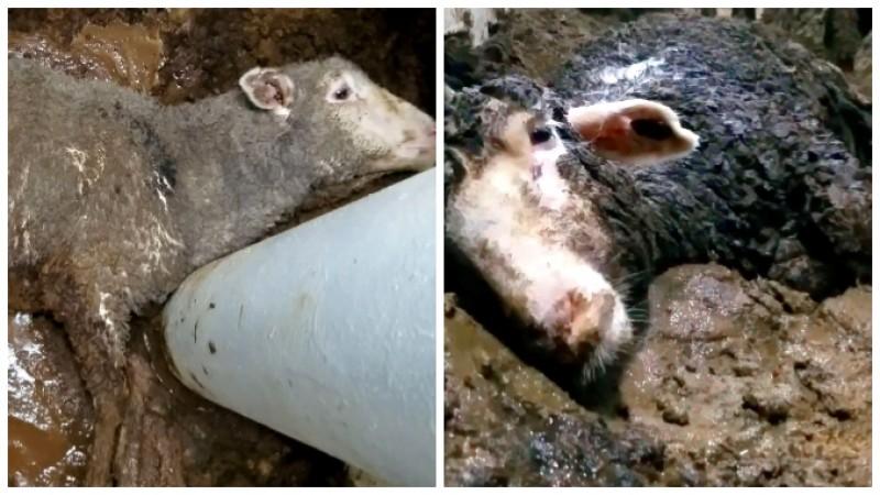 Oi din România pe plajele din Egipt, după ce au fost aruncate peste bord în Marea Roșie!