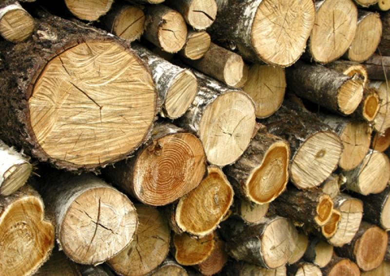 Pagubă însemnată pentru mai puțin de 1 metru cub de lemne!