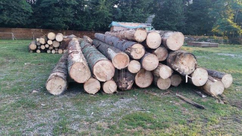 Pagubă-n... lemn! Ce a pățit un agent economic botoșănean, prins cu material lemnos fără acte!