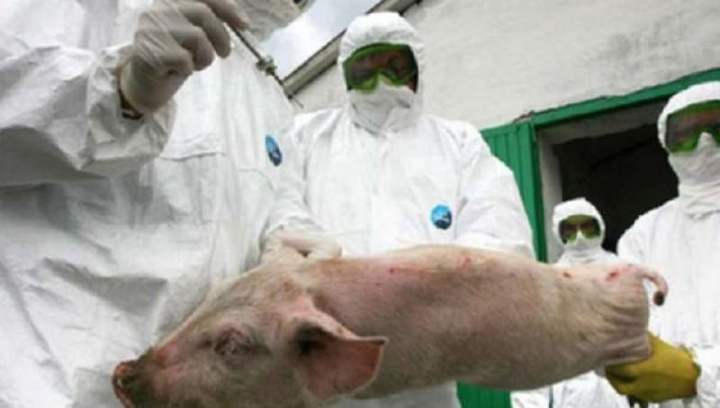 Parlamentului European, 50 de milioane de euro pentru sprijinirea fermierilor afectaţi de pesta porcină africană!