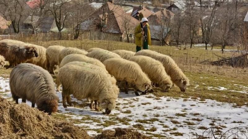 Pășuni de închiriat de la stat - Ce suprafață este disponibilă în județul Botoșani!