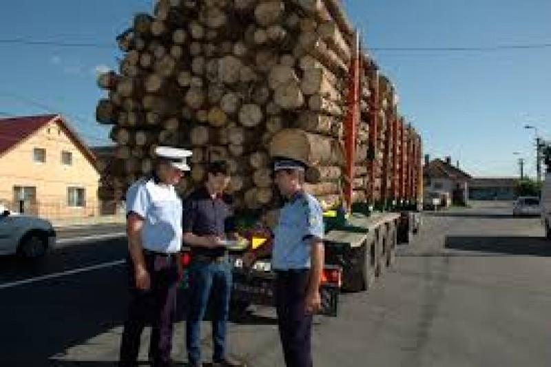Pe urma hoților de lemne: Zeci de infracțiuni, sute de contravenții, amenzi de aproape 400.000 de lei!