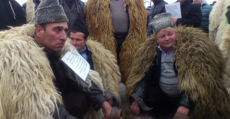 Pentru a nu se trezi din nou cu ciobanii pe gardurile Parlamentului, Guvernul se grăbește să lase liber pășunatul iarna