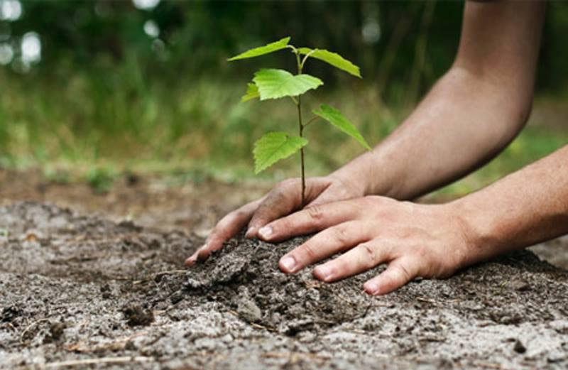 """Perioada pentru depunerea cererilor la schema de ajutor de stat """"Sprijin pentru prima împădurire și crearea de suprafețe împădurite"""" a fost prelungită"""