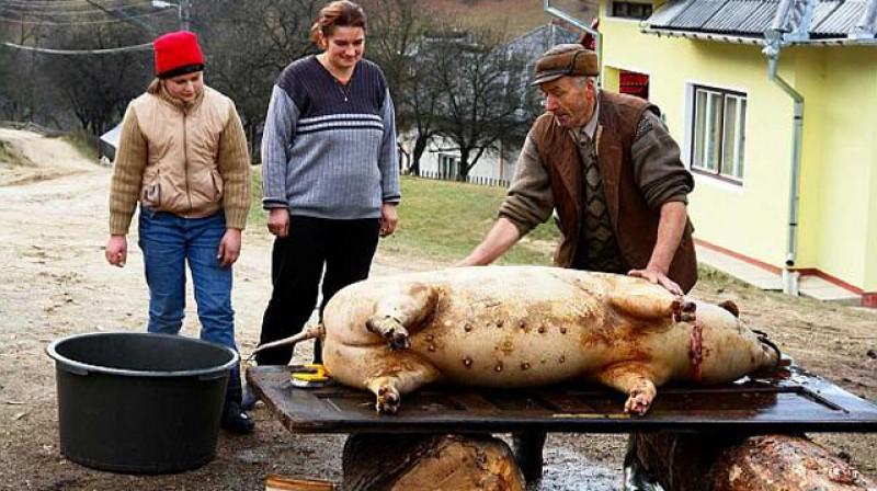 Pesta porcină africană a făcut praf tradițiile românilor!