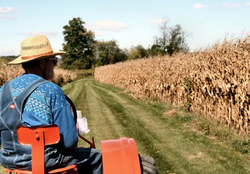 Peste o mie de fermieri botoşăneni, blocaţi la plata subvenţiilor pe 2016