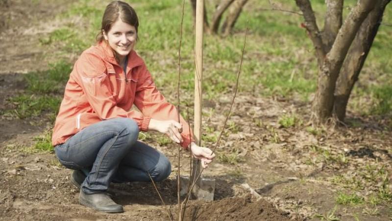 Plantări în livadă: de ce nu se prind pomii fructiferi. 10 greșeli de evitat!