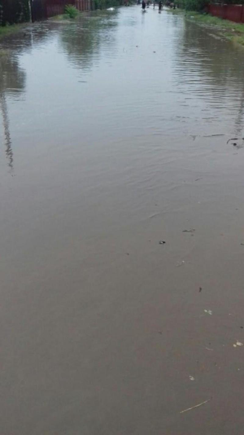 Ploile au făcut prăpăd în județ: Case și drumuri inundate, copaci căzuți. Autoritățile pregătesc rezerve de nisip și saci - VIDEO