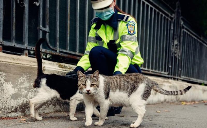 Poliţia Animalelor a devenit complet operaţională. Sesizările se fac tot la 112