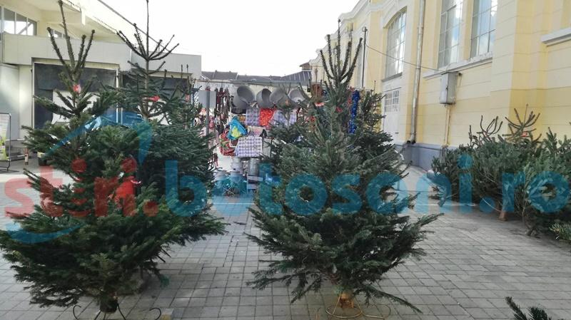 Pomi de Crăciun confiscați de polițiștii botoșăneni de la un ieșean!