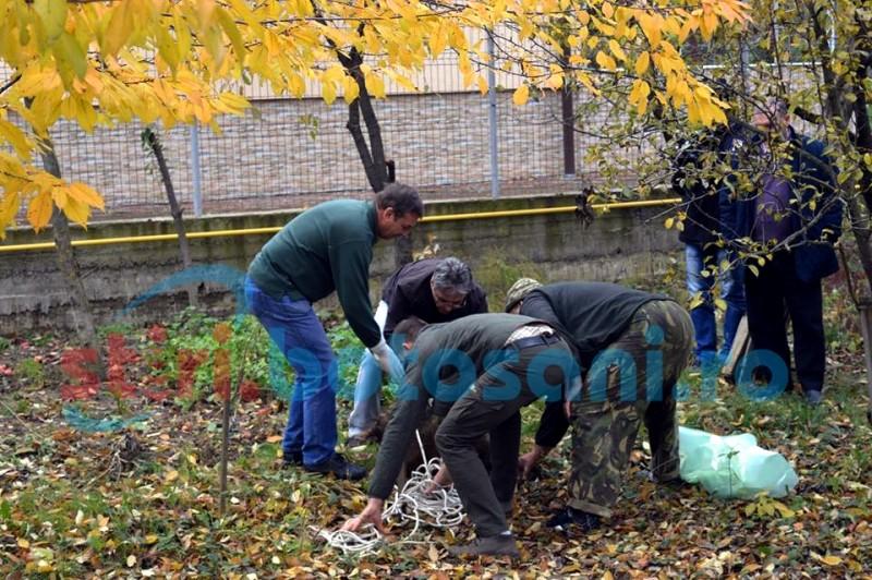Porcul mistreț a fost tranchilizat și dus la DSVSA Botoșani! FOTO