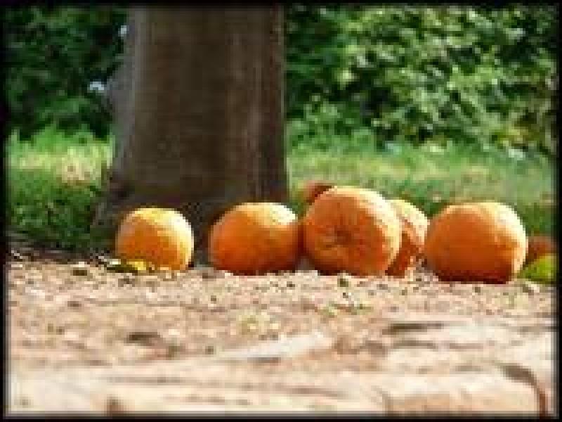 Povestea cutiei cu portocale: Tu cat ai adunat?