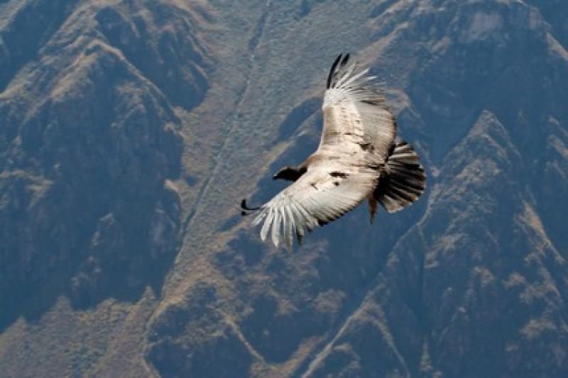 Povestea de suflet: Tu ai curaj sa ramai vultur?