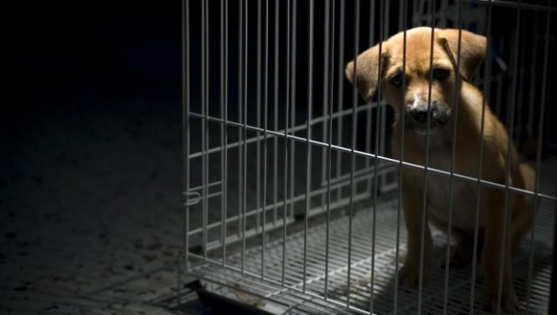 Premieră în România: Se înființează Poliția Animalelor. Autoritățile pot acționa fără mandat dacă un animal este torturat