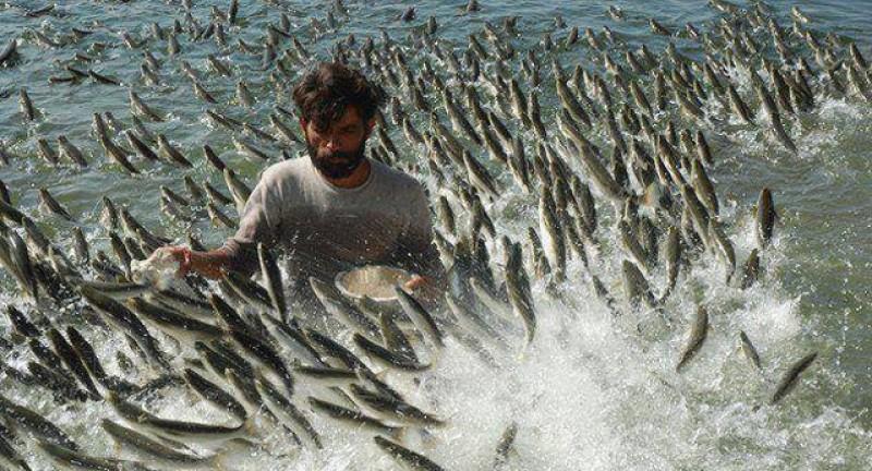 Primăriile din Flămânzi, Sulița și Bălușeni primesc bani europeni pentru a încuraja consumul de pește