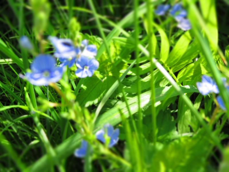 Primăvara își intră în drepturi! Prognoza meteo pe două săptămâni