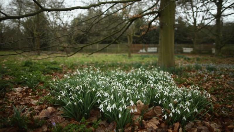 Primăvara se instalează definitiv. Cum va fi vremea în primele zile de martie