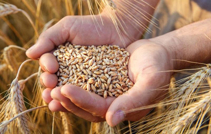 Veste excelentă pentru economia de la Botoșani: Producția agricolă din acest an este peste media anilor anteriori