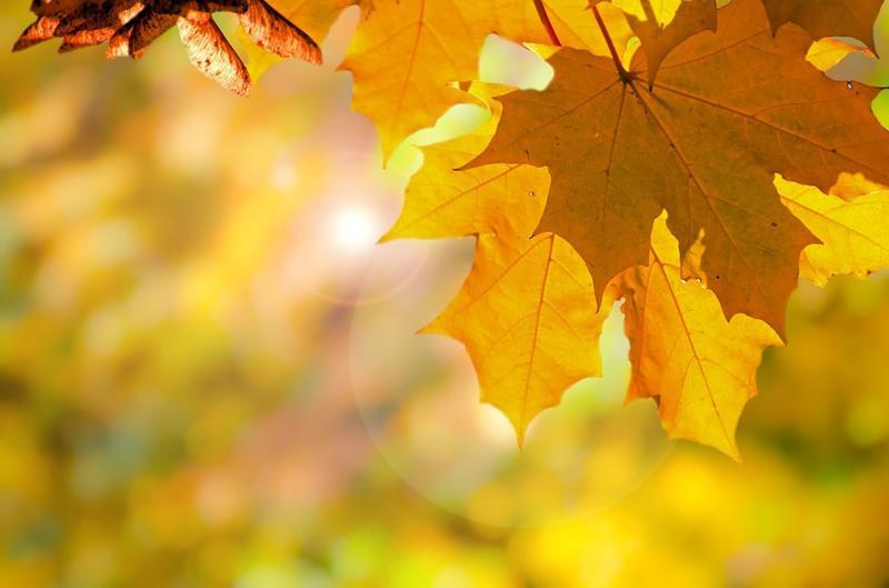 Prognoza meteo: vremea va fi caldă și în primele zile din noiembrie, apoi va urma o răcire treptată