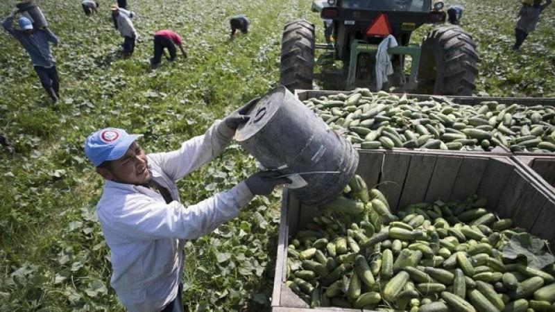Proiect în agricultură: 25% din plata zilierilor va fi suportată de stat