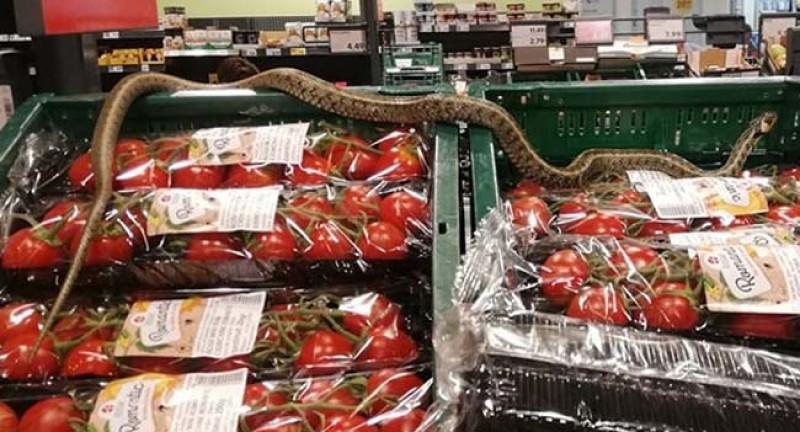 Protecția Consumatorului a amendat Kaufland cu 10.000 de lei pentru șarpele din magazinul din Sfântu Gheorghe