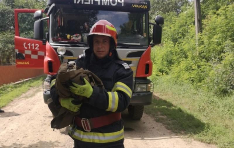 Pui de barză salvat de pompieri