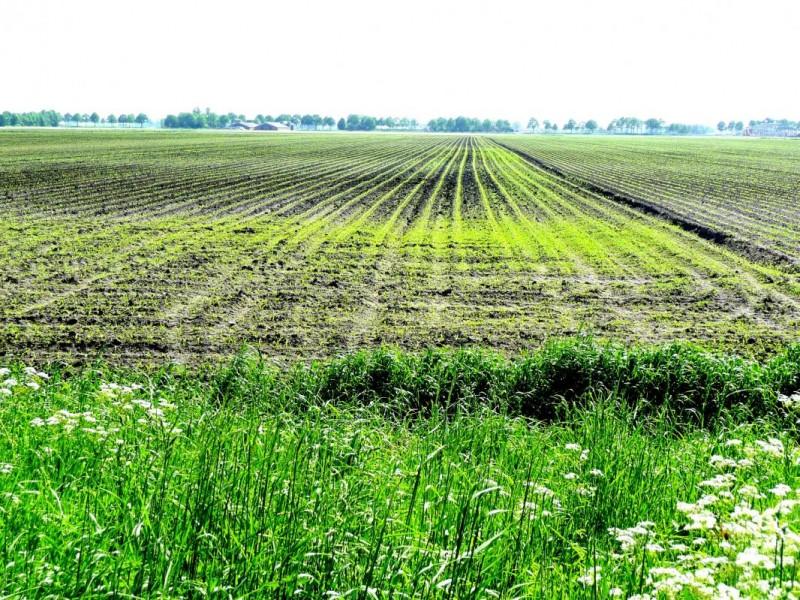 Punct final în campania de depunere a cererilor de subvenţii agricole