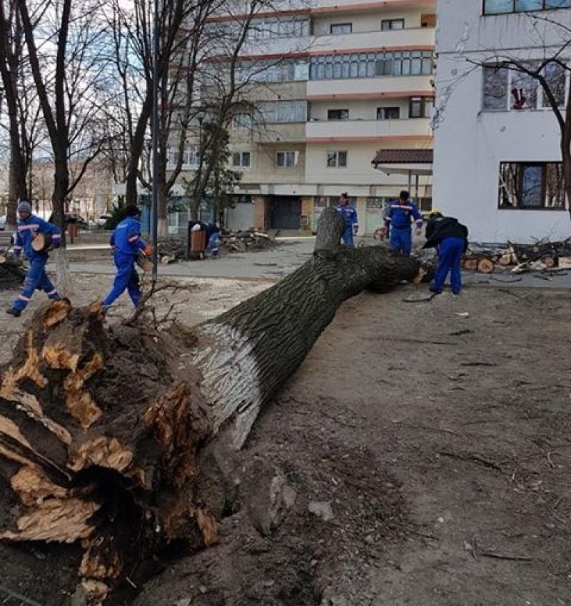 """""""Am mai tăiat mulţi copaci care erau pericol public. Cetățenii ne-au făcut plângeri!"""""""