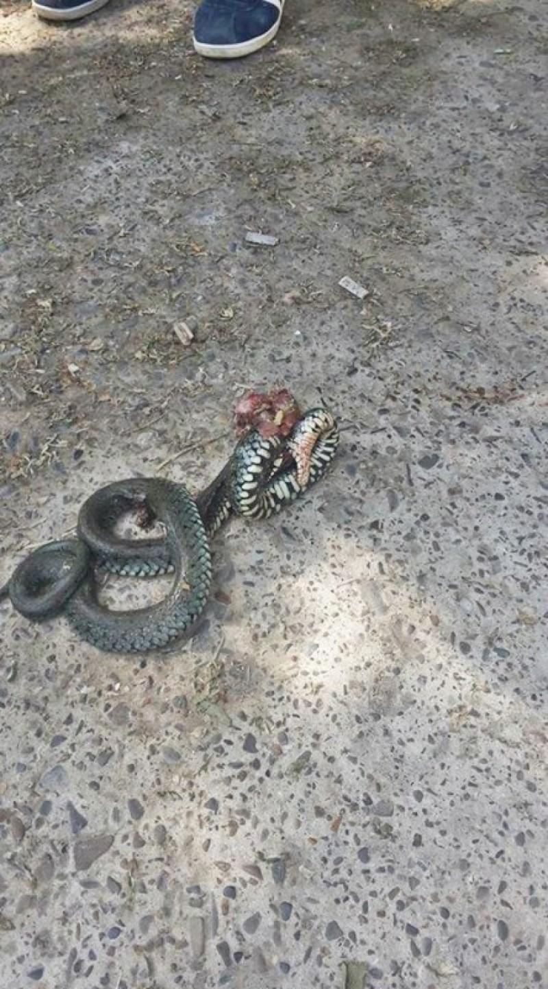 """""""Vânătoare"""" de șerpi într-o comună din județul Botoșani - FOTO"""