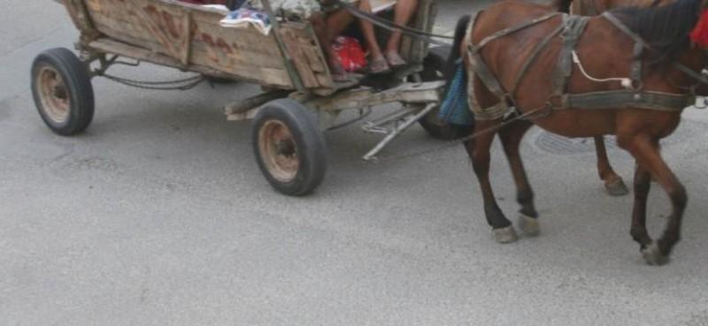 Rănit după ce a căzut din căruță. Polițiștii au avut parte de o surpriză!