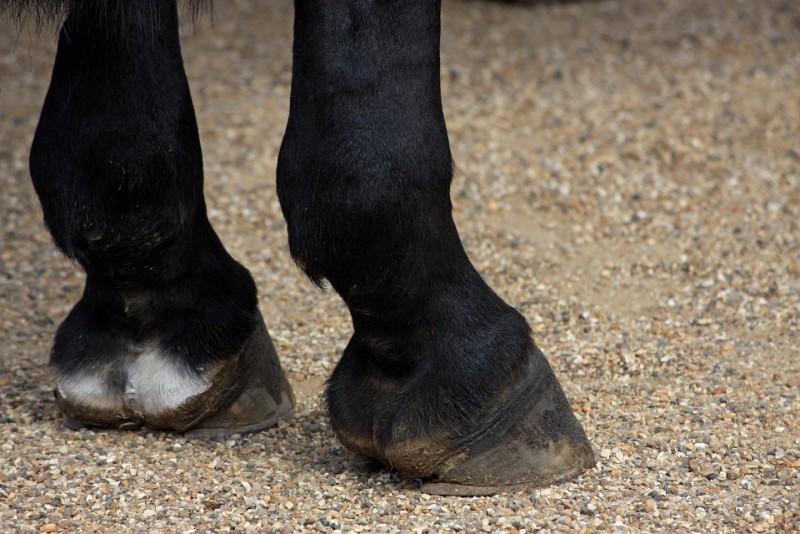 Rănit grav de calul din gospodărie!