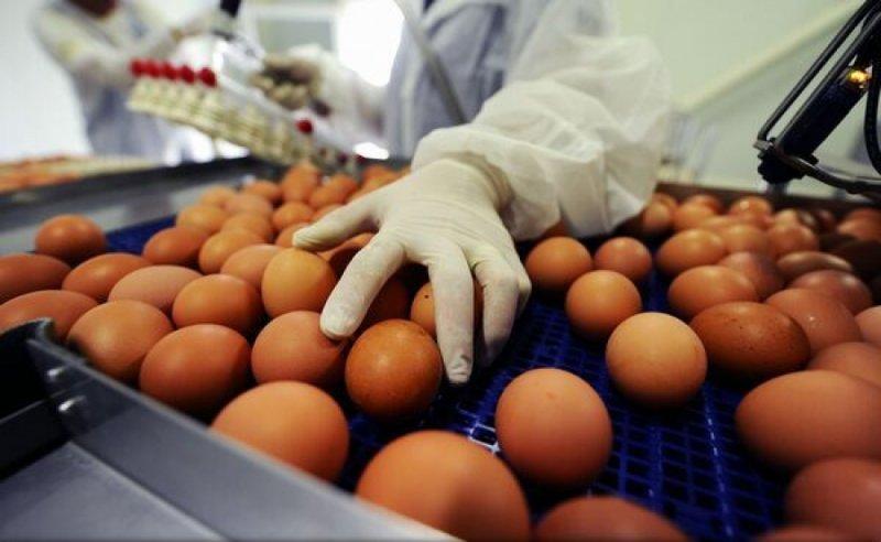 Romania, afectata de scandalul oualor infestate cu insecticid: A fost depistata o tona de galbenus de oua contaminat cu fipronil!