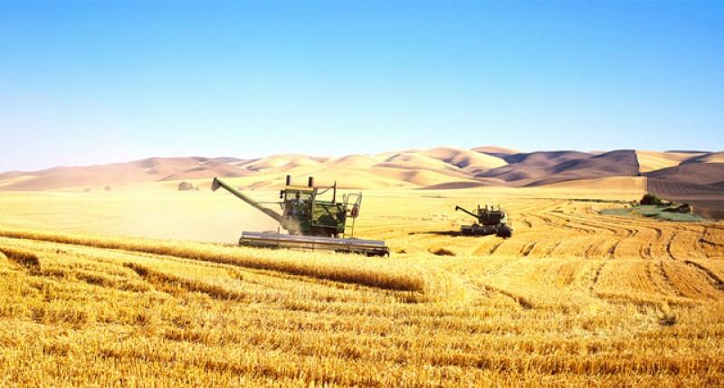 România se pregătește de plafonarea achizițiilor de terenuri agricole în fața străinilor
